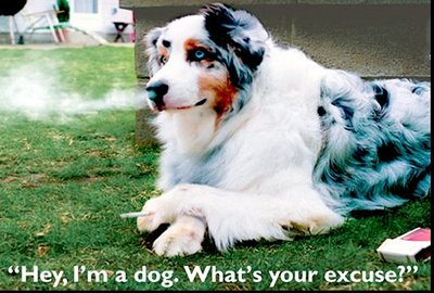 A dog breathes out smoke. Caption reads: