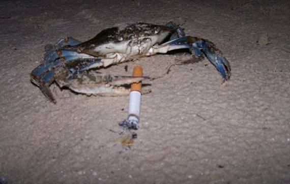 A crab appears to smoke on a dark beach.