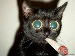 Cat smokes a joint.