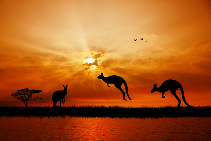 Kangaroos at sunset.