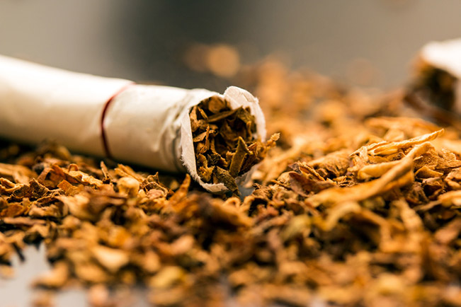 Cigarette on a pile of tobacco